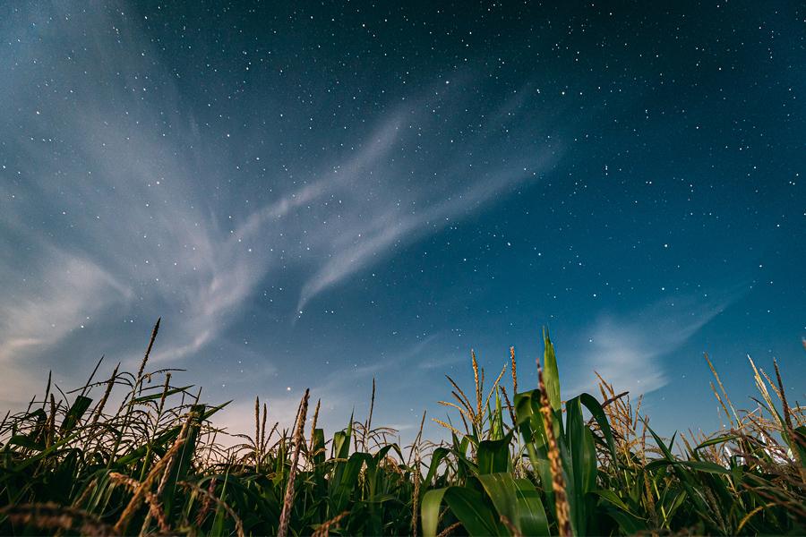 Cornfield Constellations by Liza Sofia