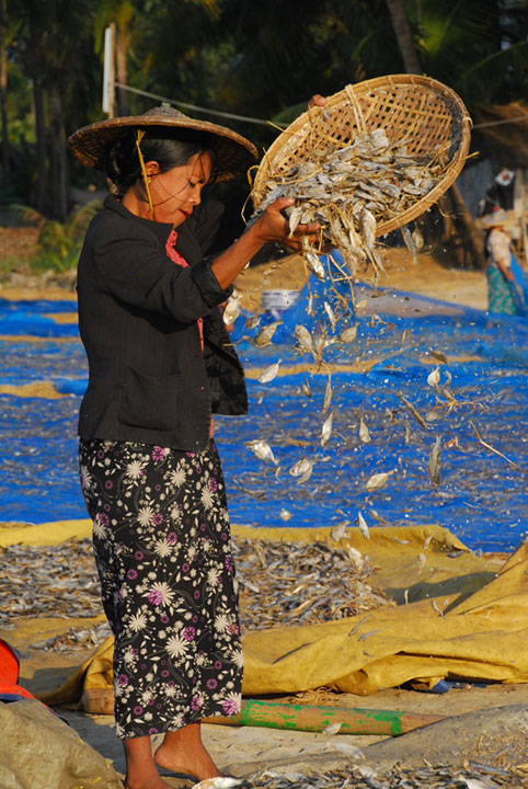 woman sifts fish from a basket