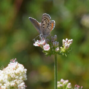 Moth alighted on a flower in the sunshine